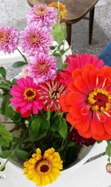 75 jaar volkstuin. Feestelijke bloemen.