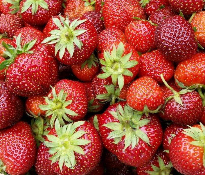 Tuin 67/68. Het is een goed aardbeien-jaar!