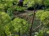 Tuin 58/59. Wie wil er nou geen engel in de tuin. Engelwortel / Angelica.