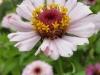 Tuin 78/79. Prachtige bloementuin.