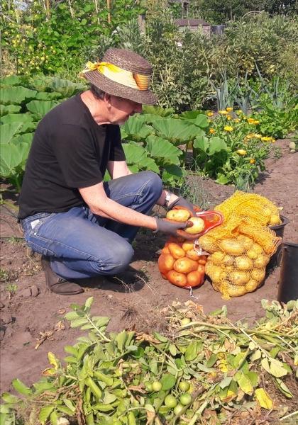 Juli 2018. Een mooie droge aardappel-oogst.