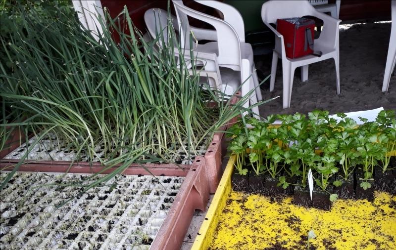 Mei 2018. Verkoop van allerlei kruiden- en groenteplantjes.