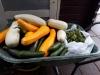 Augustus 2019. Elke vrijdag gaan er verse groenten naar de voedselbank.