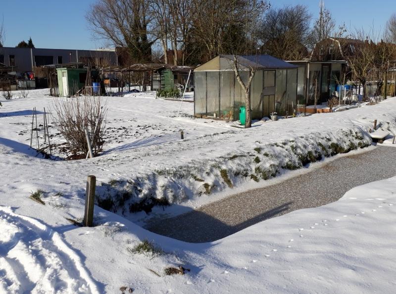 Januari 2021.  Alles is bedekt onder een isolerende laag sneeuw.