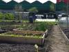 Tuin nummer 68 op 1 mei 2013